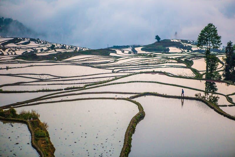 Terrazzi del riso di Yuanyang in Cina fotografie stock