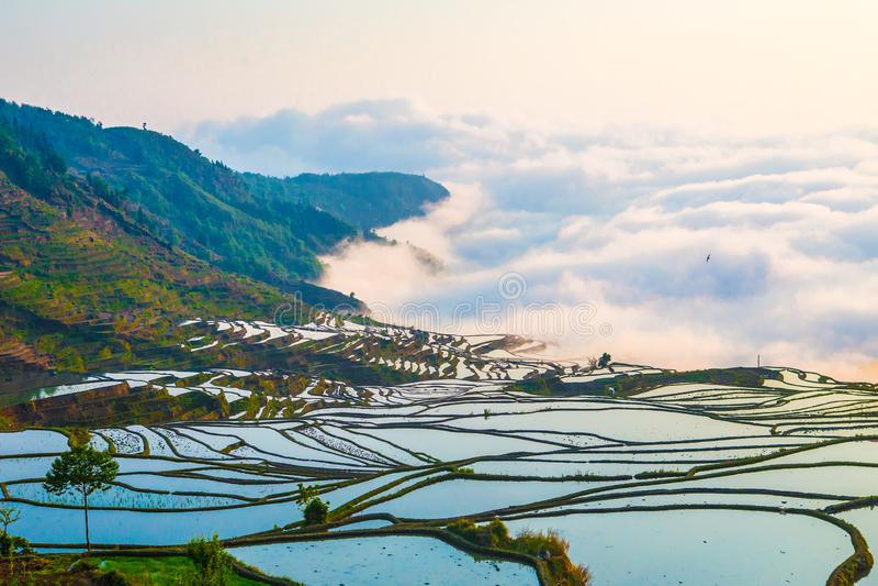 Terrazzi del riso di Yuanyang in Cina immagine stock