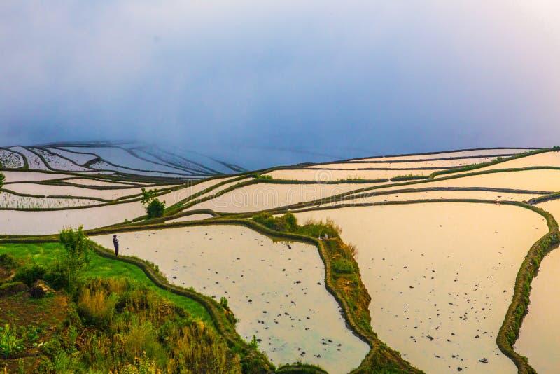 Terrazzi del riso di Yuanyang in Cina immagini stock libere da diritti