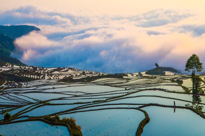 Terrazzi del riso di Yuanyang in Cina fotografia stock