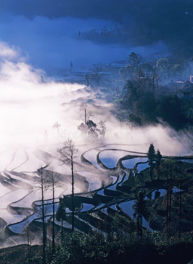 Terrazzi del riso di yuanyang di mattina fotografia stock