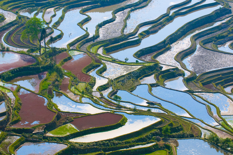 Terrazzi del riso di yuanyang, yunnan, porcellana fotografie stock libere da diritti