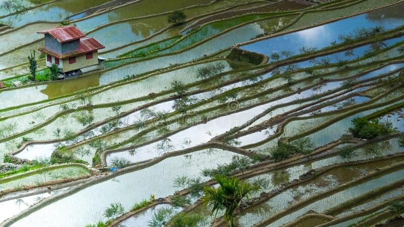 Terrazzi del riso e case del villaggio Banaue, Filippine fotografie stock