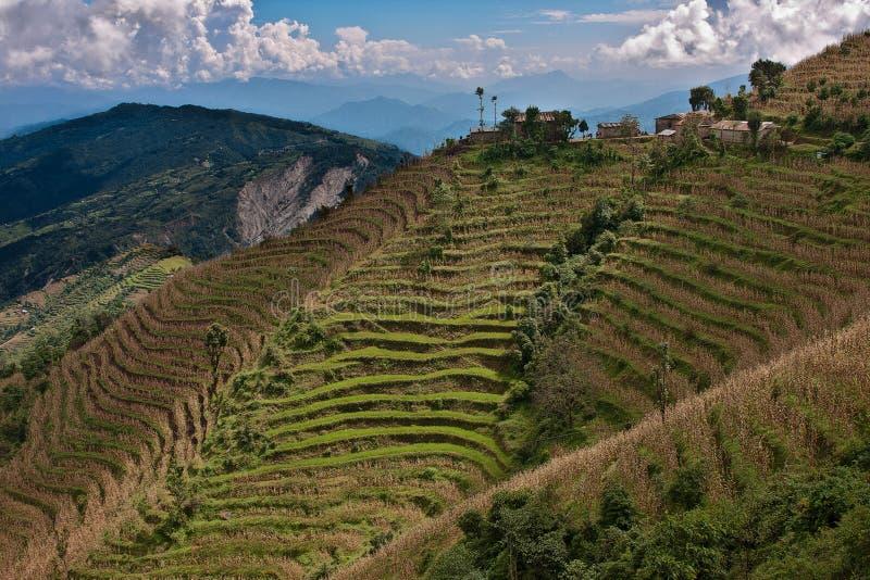 Terrazzi del riso nella valle di Kathmandu, Nepal immagini stock