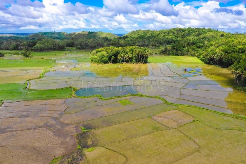 Terrazzi del riso nelle Filippine Coltivazione del riso nel Nord delle Filippine, Batad, Banaue fotografia stock libera da diritti