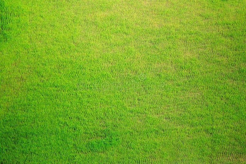 Terrazzi del riso nelle Filippine I raccolti del riso Cultivati del riso fotografia stock