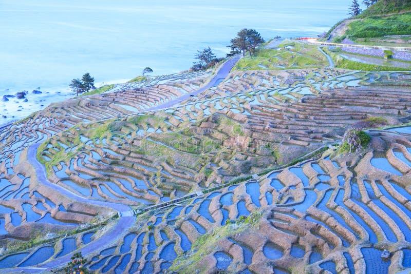 Terrazzi del riso a penombra immagini stock libere da diritti
