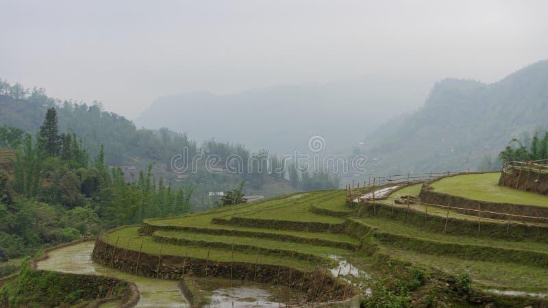 Terrazzi del riso in Sapa fotografia stock