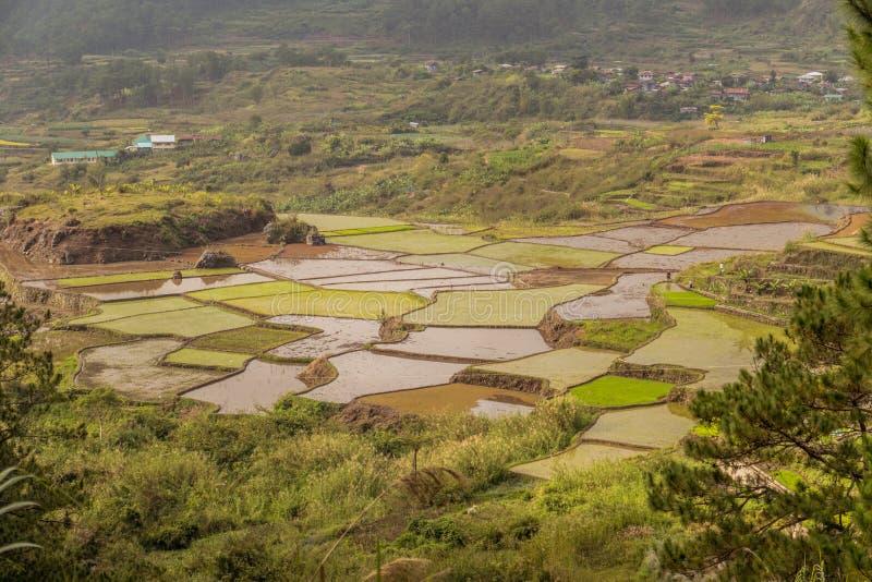 Terrazzi del riso su un tempo nebbioso fotografia stock libera da diritti