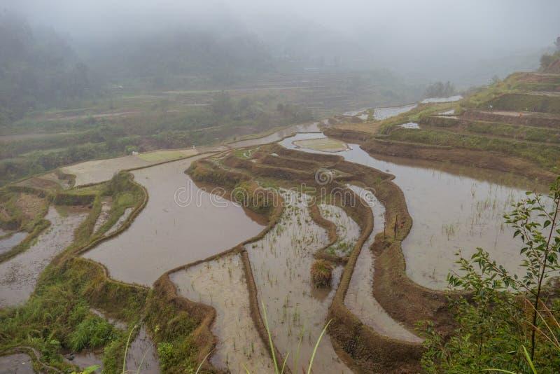Terrazzi del riso su un tempo nebbioso immagini stock