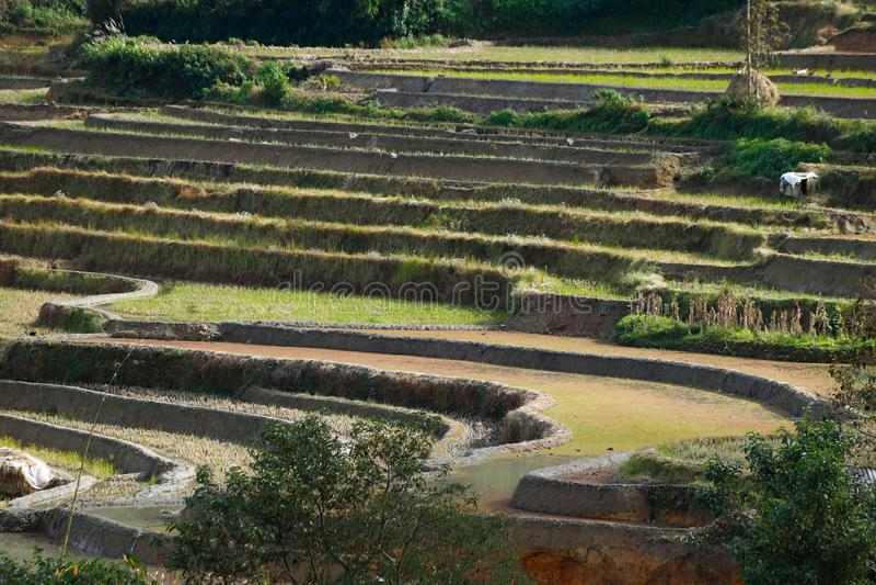 Terrazzi del riso del Yunnan, Cina immagine stock