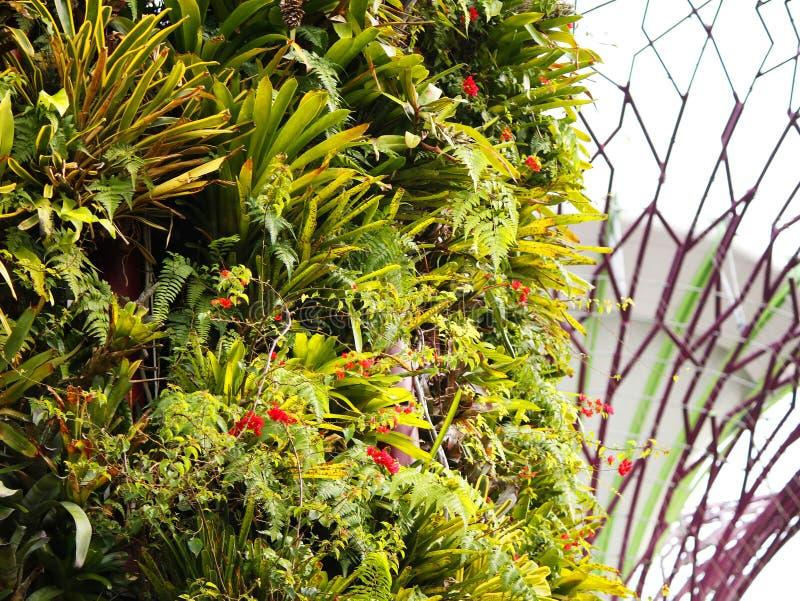 Terrazzi della pianta su un Supertree fotografia stock