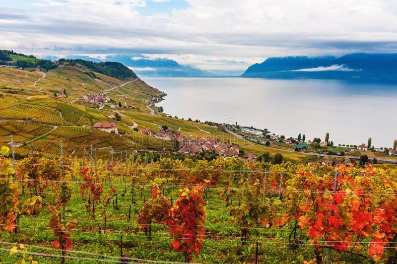 Terrazzi della vigna al lago Lemano in autunno, Lavaux fotografia stock libera da diritti