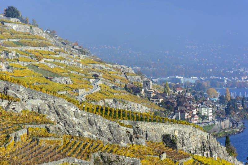 Terrazzi della vigna di Lavaux in autunno immagini stock