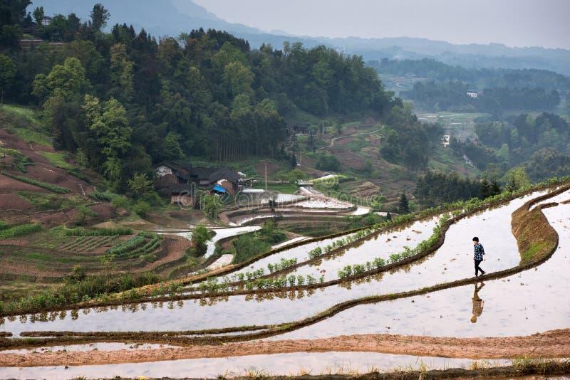 Terrazzi e ragazza del riso immagini stock