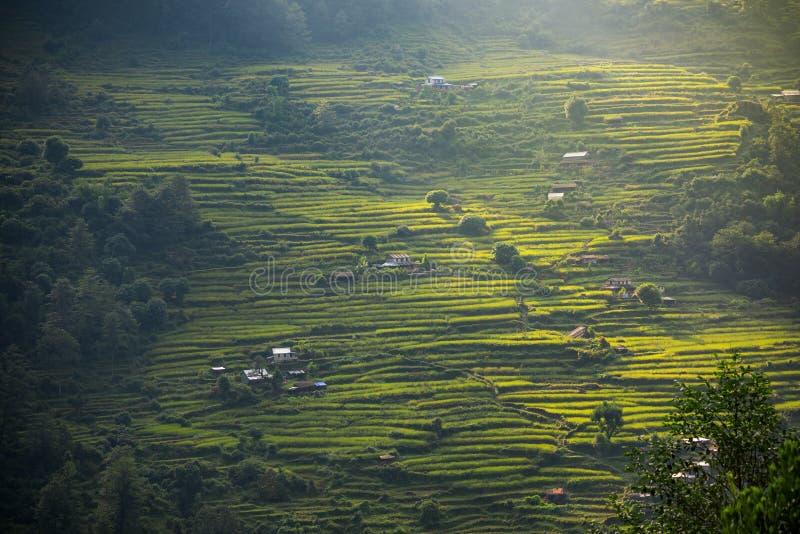 Terrazzi nell'area di conservazione di Annapurna, Nepal del riso fotografie stock