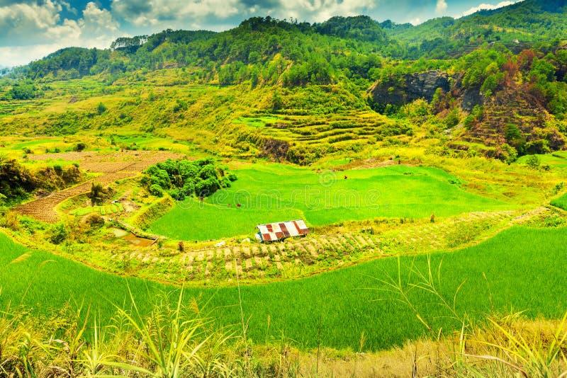 Terrazzi tradizionali del riso con una piccola capanna sulla scogliera del bordo di una montagna nei precedenti della natura pitt fotografia stock