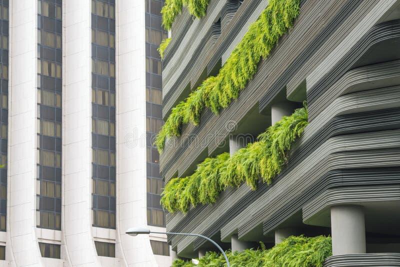 Terrazzi verdi immagine stock. Immagine di terrazzo, flora - 47820657