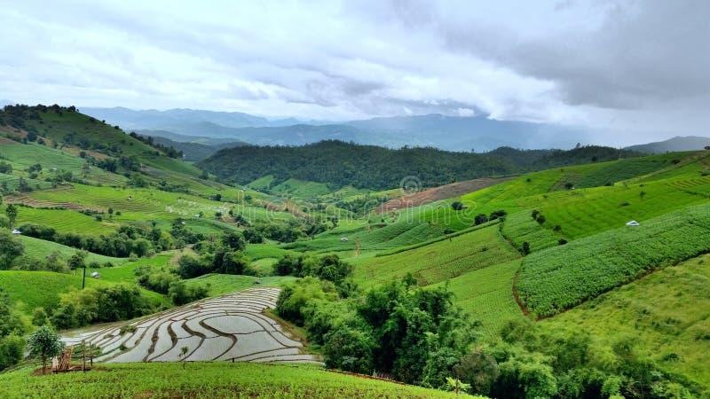 Terrazzi verdi del riso fotografie stock libere da diritti