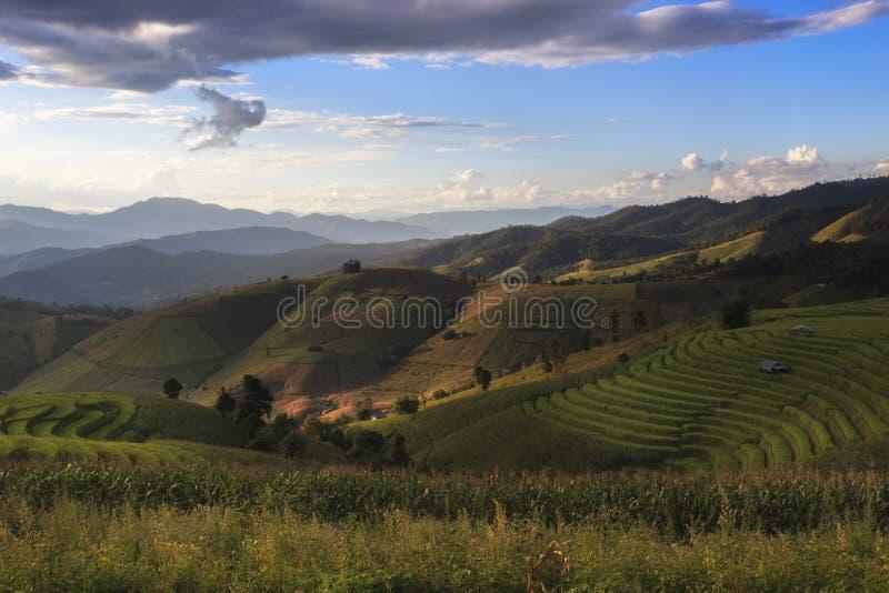 Terrazzo del riso a PA Pong Piang, Chiang Mai di divieto fotografia stock