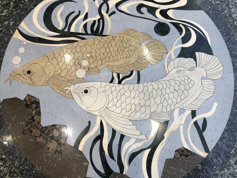 Terrazzoyttersida med modellen för pararowanafisk arkivfoto