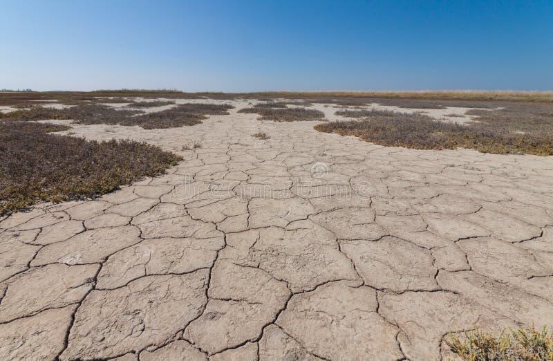 Terre avec la terre sèche et criquée photos libres de droits