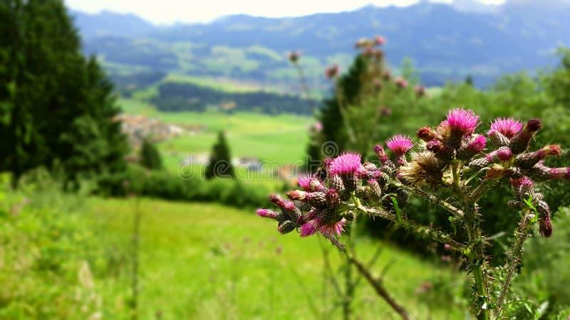 Terre d'Allgäuer photo stock