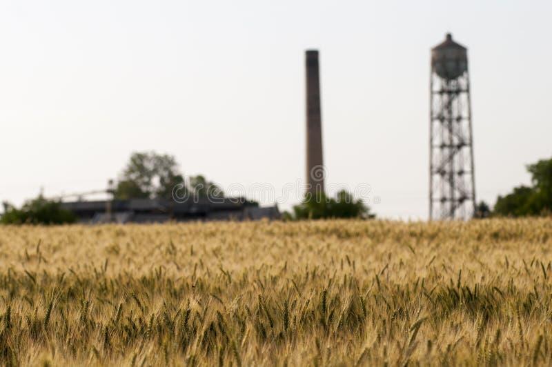 Terre de blé photo stock