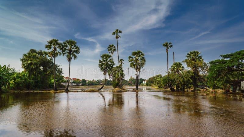 Terre de ferme et le palmier à sucre en Thaïlande dans la province de Nonthaburi photographie stock