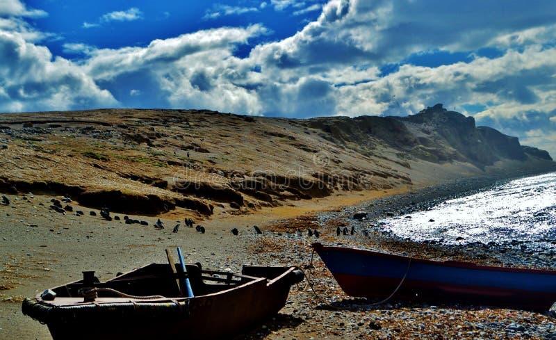 Terre de pingouin photo libre de droits