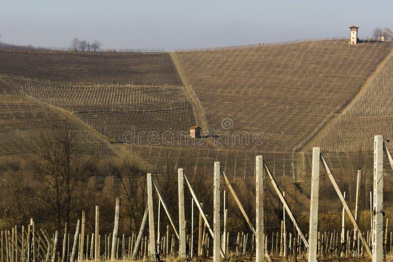 Terre del vino royalty-vrije stock fotografie