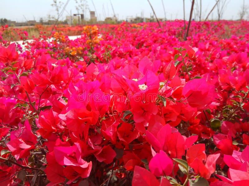 Terre des fleurs photographie stock libre de droits