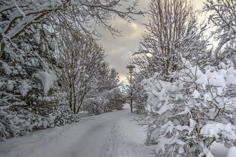 Terre Islande d'hiver photo libre de droits