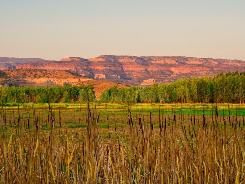 Terre rosse dalla palude ad alba fotografia stock