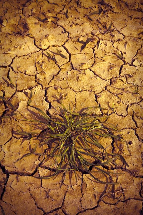 Terre stérile brûlée par le soleil : concept de famine et de pauvreté photo stock