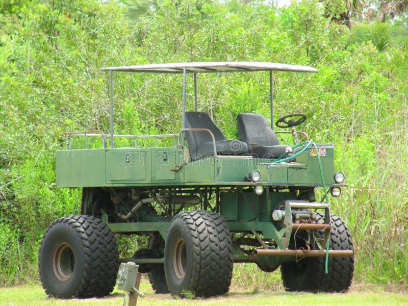 Terreni paludosi Florida di giro del cavolo della palude immagini stock libere da diritti
