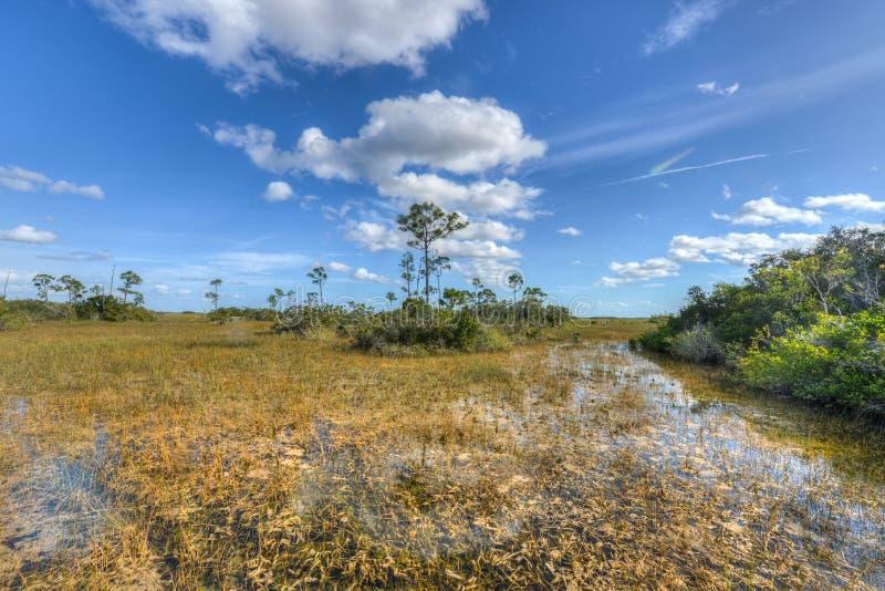 Terreni paludosi scenici di Florida del paesaggio fotografie stock libere da diritti