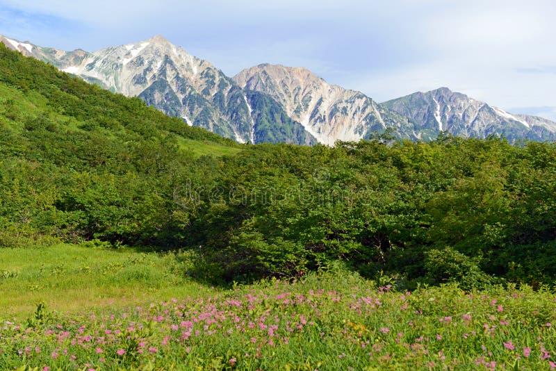 Terreno alpino en el soporte Karamatsu, montañas de Japón foto de archivo libre de regalías