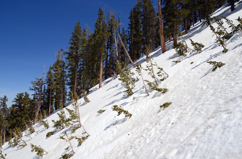 Terreno alpino nevado en Griffith Peak cerca de Charleston Peak en la región de Charleston del soporte fotos de archivo