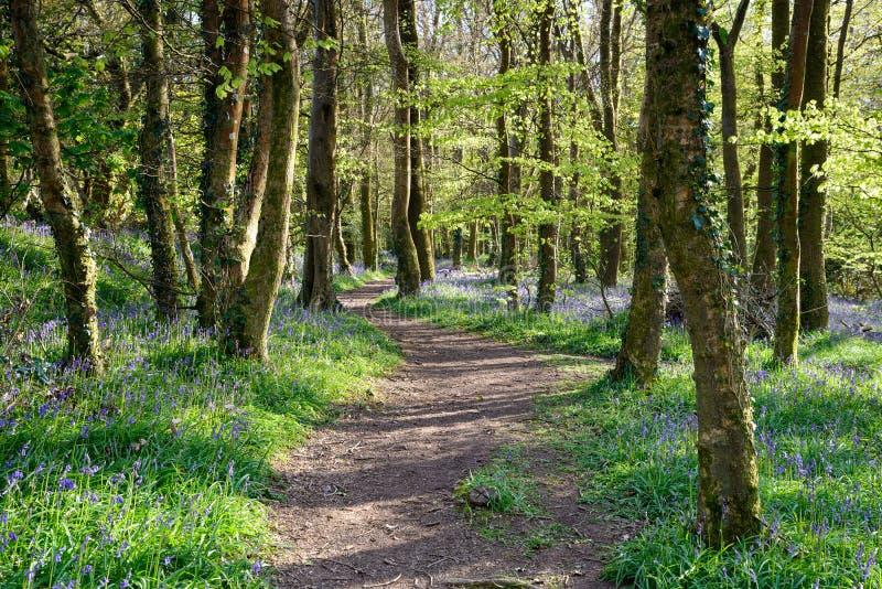 Terreno boscoso della Cornovaglia fotografia stock libera da diritti