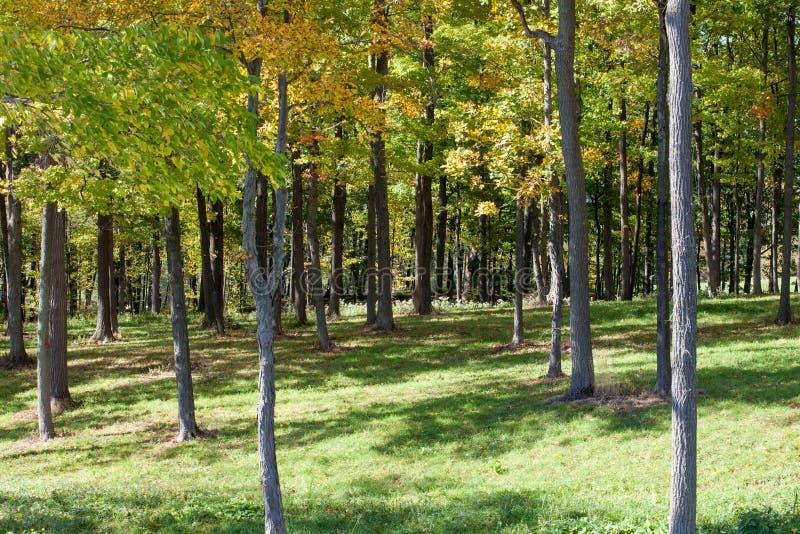 Terreno boscoso erboso su Seneca Lake immagine stock
