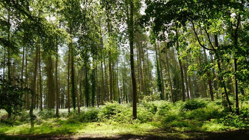 Terreno boscoso inglese fotografia stock