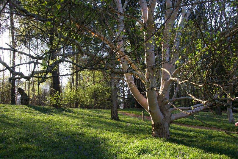 Terreno boscoso inglese nella sera fotografia stock