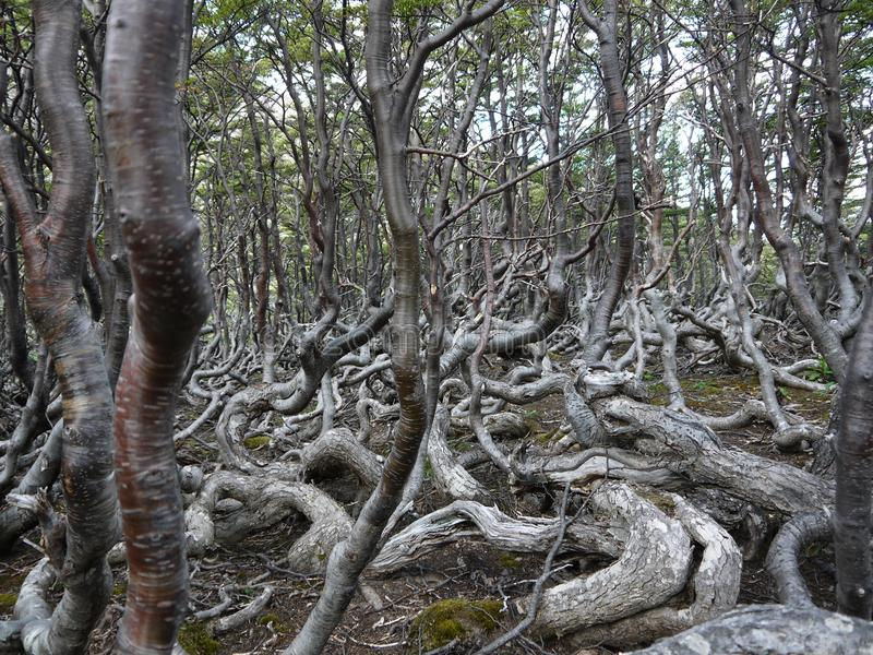 Terreno boscoso misterioso all'estremità dei mondi fotografia stock libera da diritti