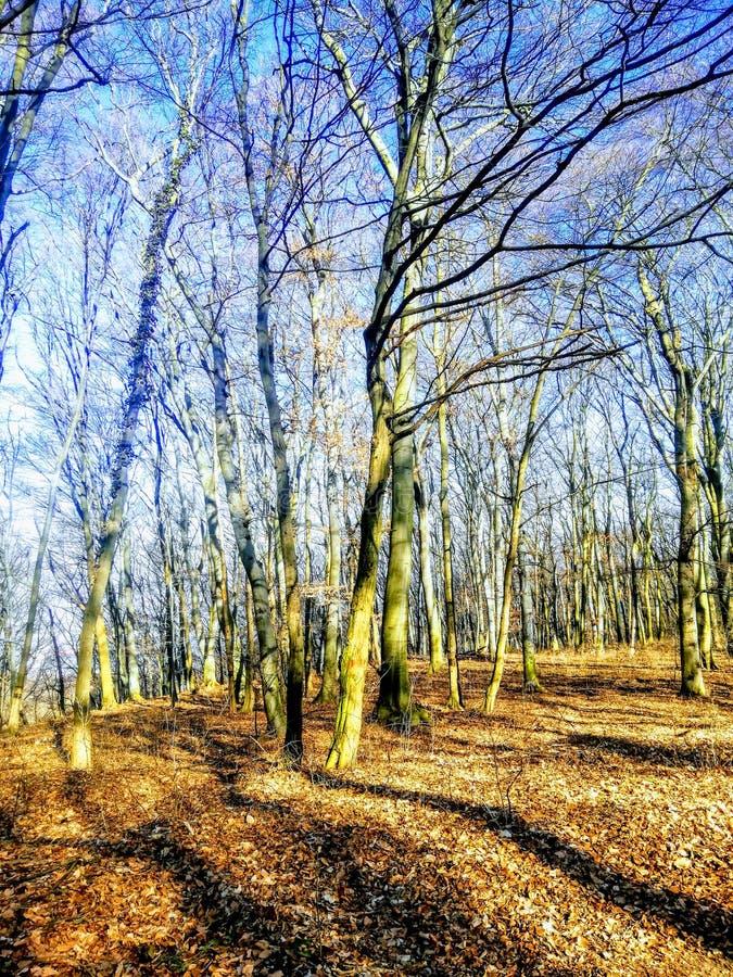 Terreno boscoso soleggiato fotografia stock