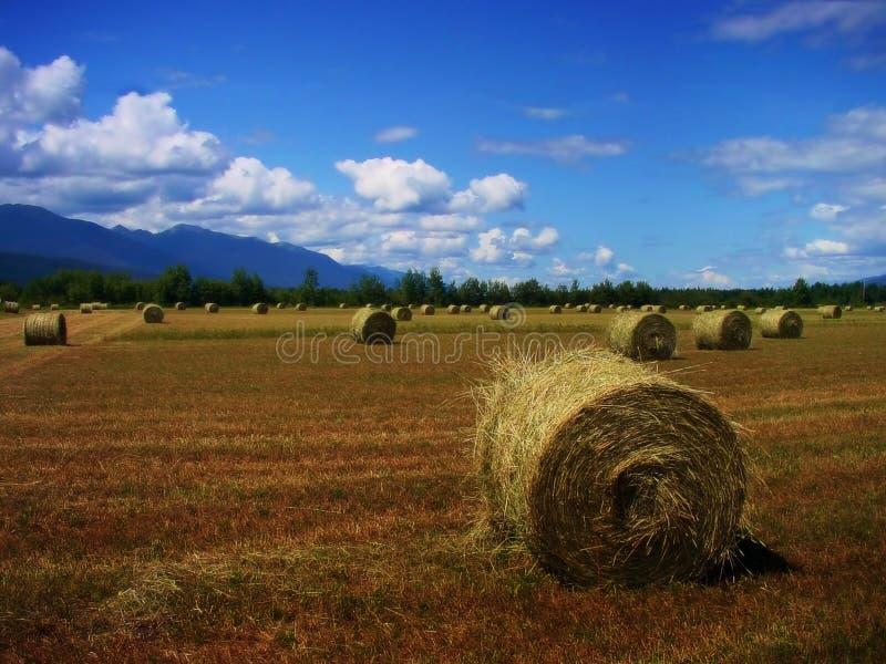 Download Terreno coltivabile immagine stock. Immagine di cereale - 221503