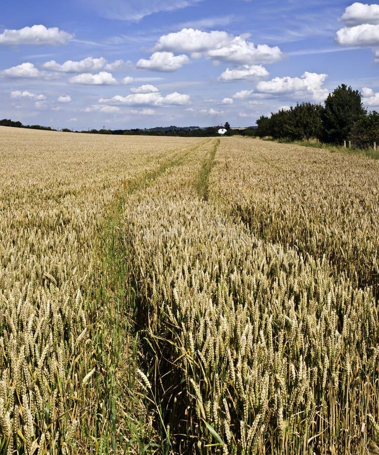 Terreno coltivabile immagine stock libera da diritti