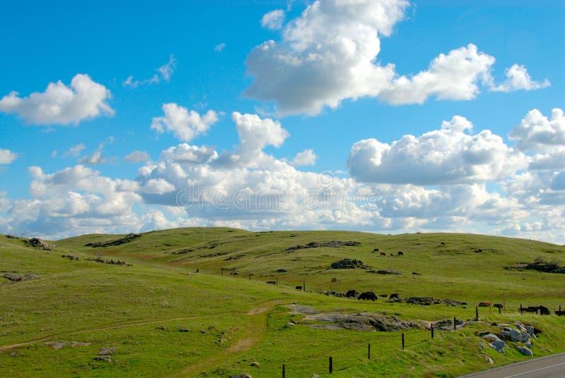 Terreno coltivabile in California S.U.A. immagine stock libera da diritti