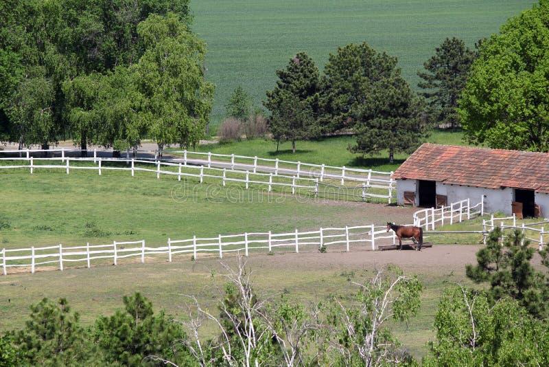 Terreno coltivabile con il recinto per bestiame ed il cavallo fotografia stock
