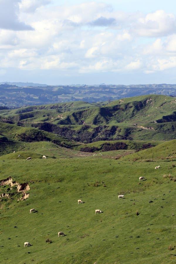 Terreno coltivabile di rotolamento con cielo blu e le nubi bianche immagine stock libera da diritti